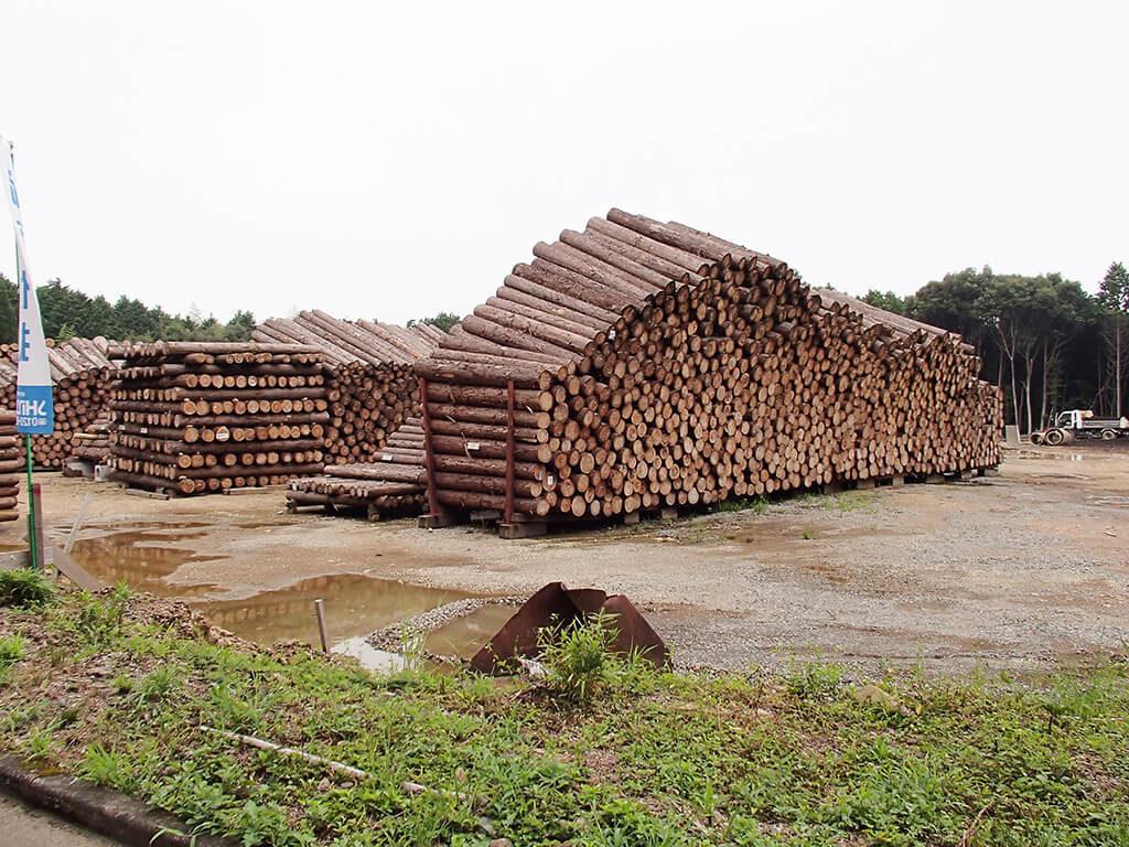 wood-原木乾燥